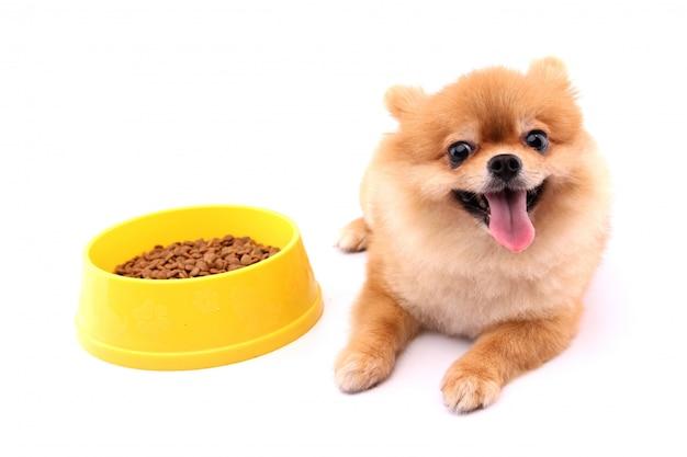 ポメラニアン犬とドッグフードと白い背景。 Premium写真