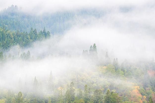 松林の霧の背景 Premium写真