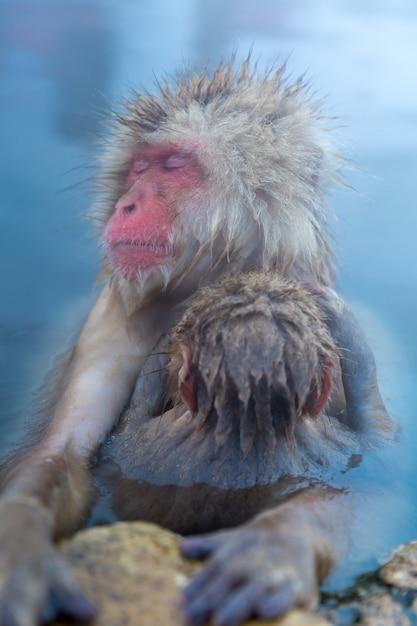 雪猿マカク温泉 Premium写真