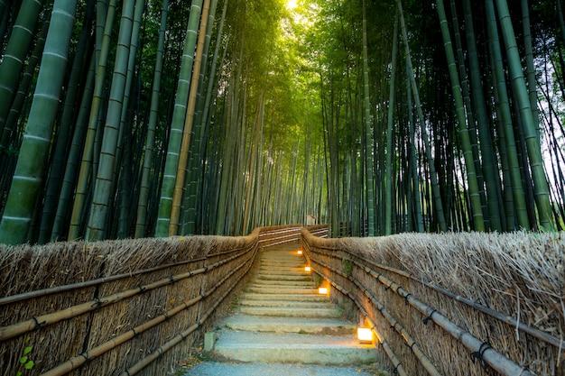 嵐山竹の森 Premium写真