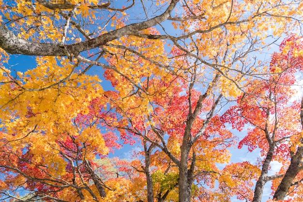 秋の木 Premium写真