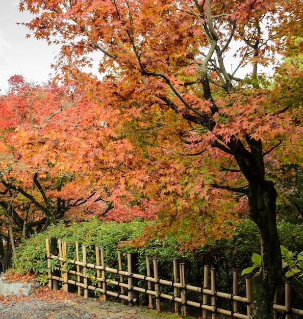 Цвета осени листья в храме тофукудзи в киото, япония Premium Фотографии