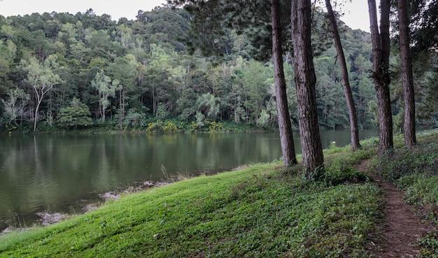 メーホンソン、タイのパンオウン国立公園の湖で松の木の反射の美しい景色 Premium写真