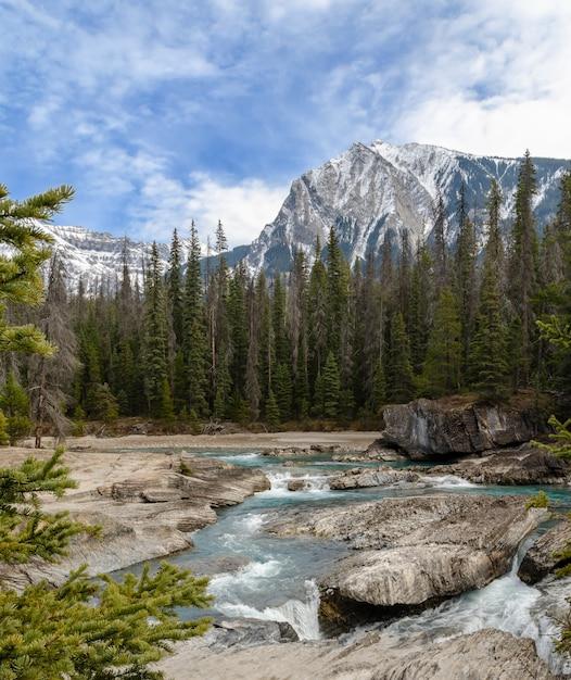 カナダ、ブリティッシュコロンビア州、ヨーホー国立公園の自然の橋で馬の川を蹴る Premium写真