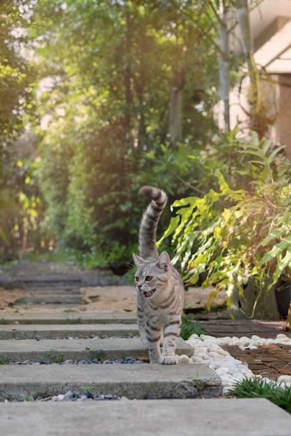 美しい黄色い目をした素敵なかわいいぶち猫は屋外の庭で石の道を歩く Premium写真