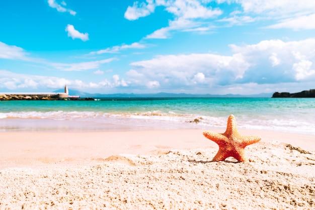ヒトデと夏のビーチ 無料写真