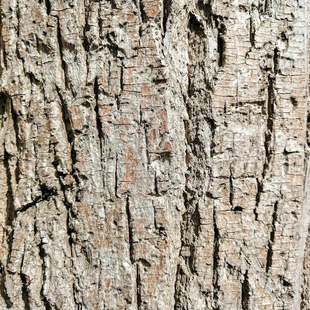 木材ログテクスチャ 無料写真