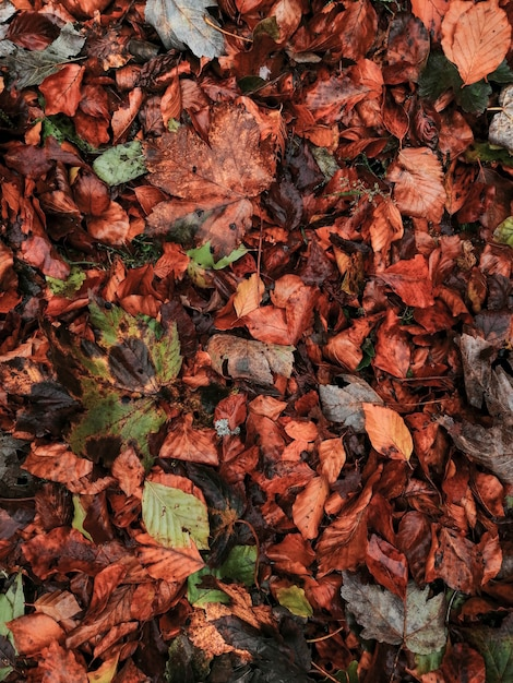 秋の葉の背景 無料写真