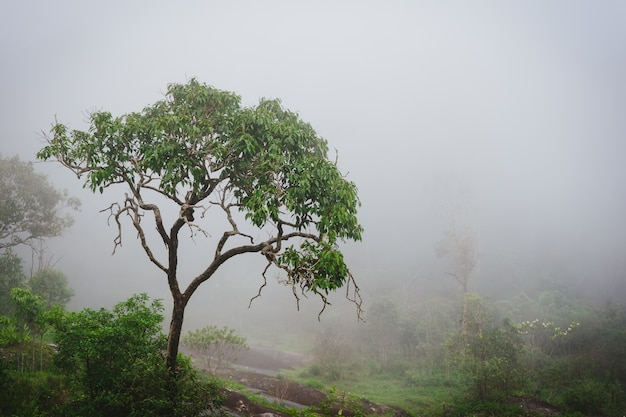 蒸気と湿気のある霧の雨林。 Premium写真