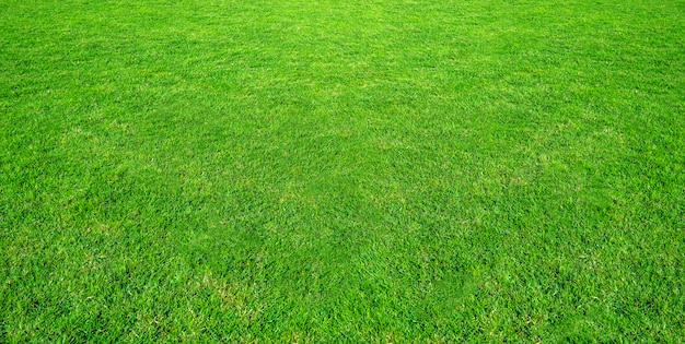 緑豊かな公共公園の芝生フィールドの風景は、自然の背景として使用します。フィールドからの緑の芝生のテクスチャです。 Premium写真