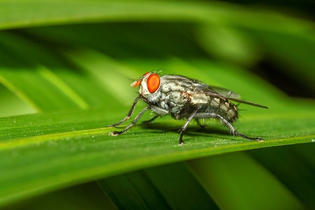 自然の中の葉の上の昆虫グリーンフライマクロを閉じる Premium写真