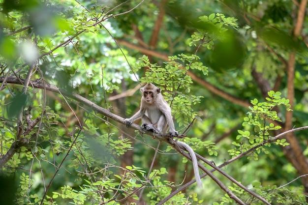 Остановка обезьяны на ветви дерева в природе в таиланде Premium Фотографии