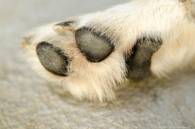 犬の足を閉じます。 Premium写真