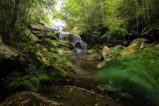 国立公園、滝の川のシーンで深い森のビュー滝を閉じます。 Premium写真