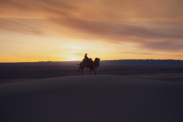 日の出、ゴビ砂漠モンゴルの砂丘を通過するラクダ。 Premium写真