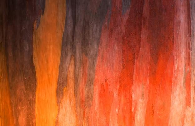ユーカリの木の背景の樹皮 Premium写真