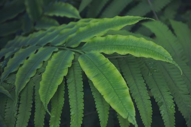 自然の緑の葉 Premium写真