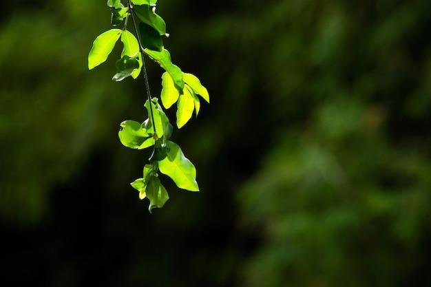 自然の背景 Premium写真