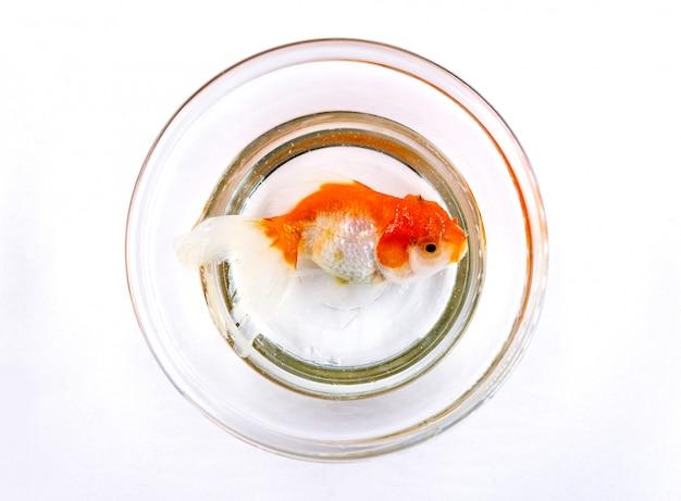 白い背景の上の黄金の魚 Premium写真