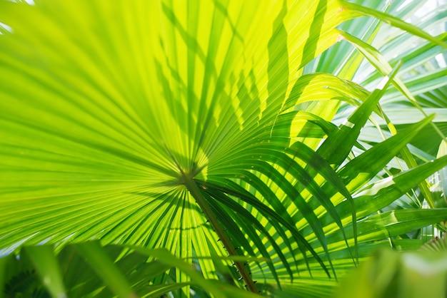 熱帯のヤシの葉の枝太陽の光自然 Premium写真
