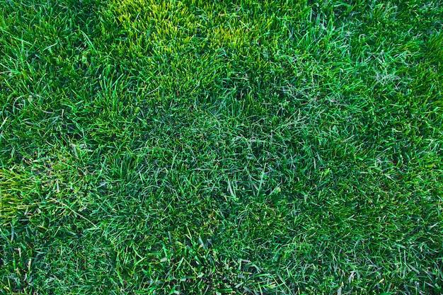 緑の芝生の背景テクスチャです。緑の芝生テクスチャ背景。上面図。 Premium写真
