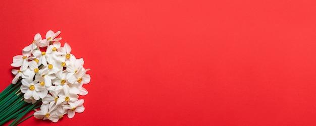 テキスト用のスペースと赤の背景に水仙の花束。 Premium写真