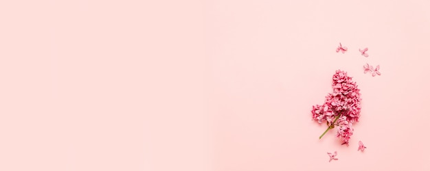 ピンクの背景にライラックの新鮮な明るい枝 Premium写真