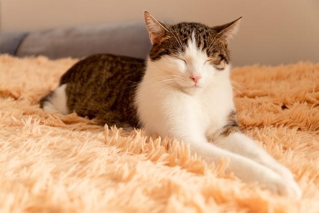 縞模様の灰色の猫はベッドに横たわって寝る Premium写真