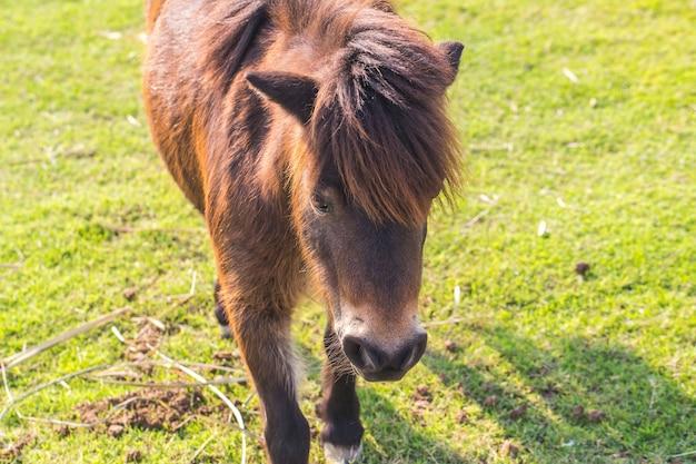 馬の小人 Premium写真