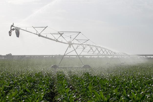 トウモロコシ畑の灌漑 Premium写真