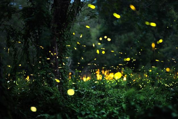 森のホタル Premium写真