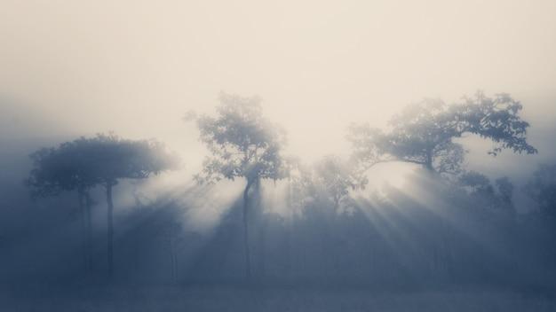 Дерево и луч света Premium Фотографии
