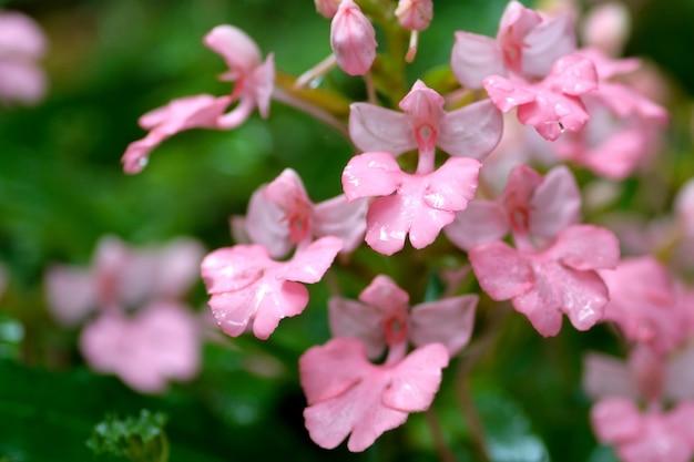 滝の近くのピンクの花 Premium写真