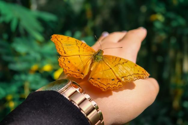バタフライ。ぼんやりとした自然の背景に美しい熱帯蝶。カラフルな蝶 Premium写真