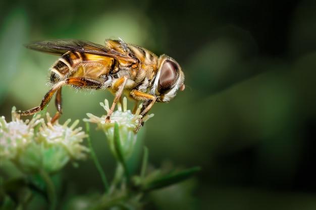 蜂と花 Premium写真