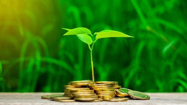 小さな植物は庭の黄金のコインのスタックで育っています。 Premium写真