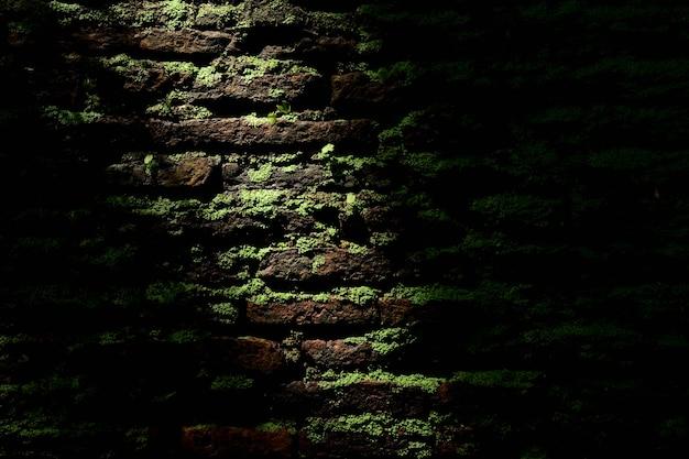 古いレンガの壁に緑の苔 Premium写真
