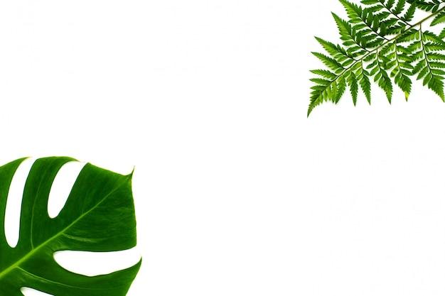 モンステラの複数の葉とシダの葉が白い背景で隔離。フラットレイデザイン Premium写真