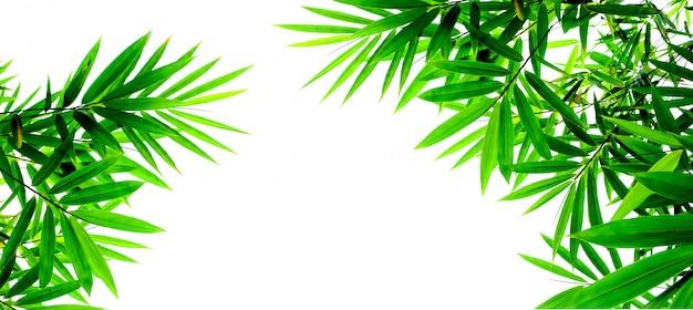 グリーン竹の葉の白い背景で隔離 Premium写真