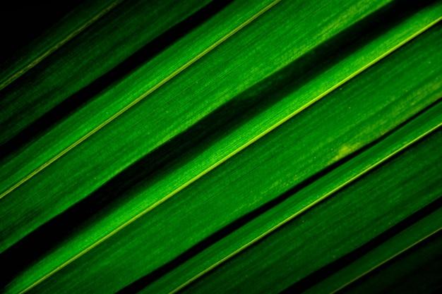 行と緑のヤシのココナッツの葉のテクスチャ Premium写真