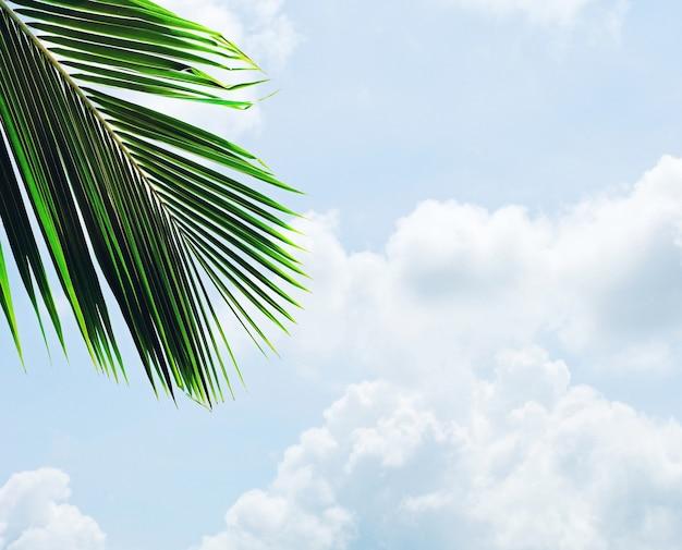 夏の雲と青い空にヤシの木の葉 Premium写真