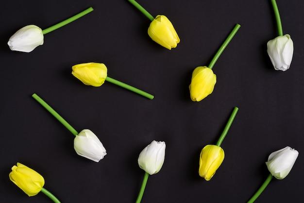 黒の背景に新鮮な白と黄色のチューリップの花。上面図。 Premium写真