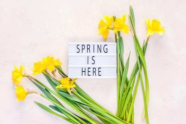 黄色い水仙の春の花 Premium写真