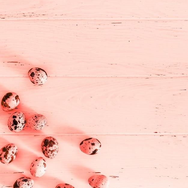 Перепелиные яйца на деревянной минимальной поверхности коралла Premium Фотографии