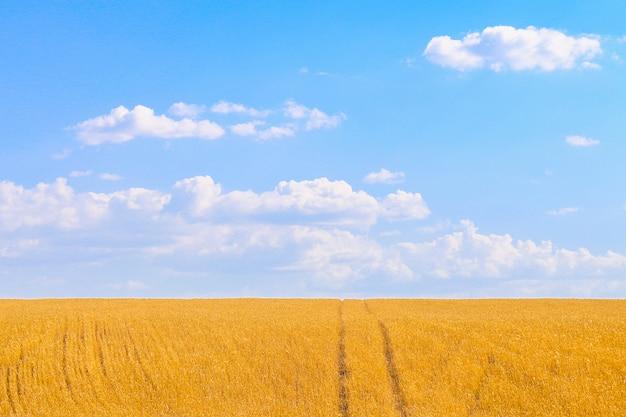 美しい黄金の麦畑 Premium写真