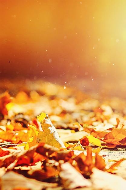 秋の背景は、地球上の公園の紅葉、秋の公園の黄色、緑の葉です。 Premium写真