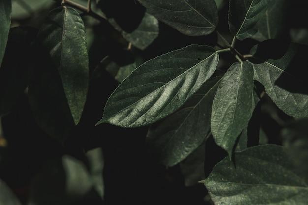 緑の葉 Premium写真
