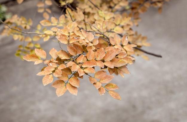 自然の秋のシーズンに木の上の黄色の葉 Premium写真