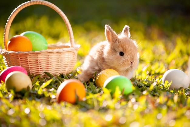 Милый маленький кролик и пасхальные яйца на лугу Premium Фотографии