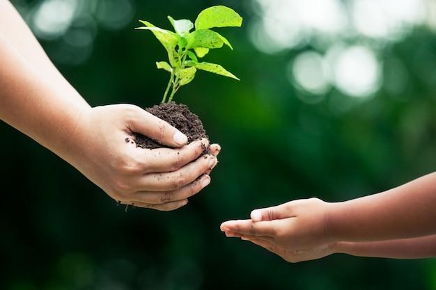 一緒に植えるために子供に若い木を与える母の手 Premium写真